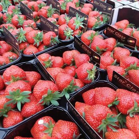 Aardbeien Demedts-De Mey